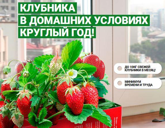 Чудо ягодница клубники в Волжском