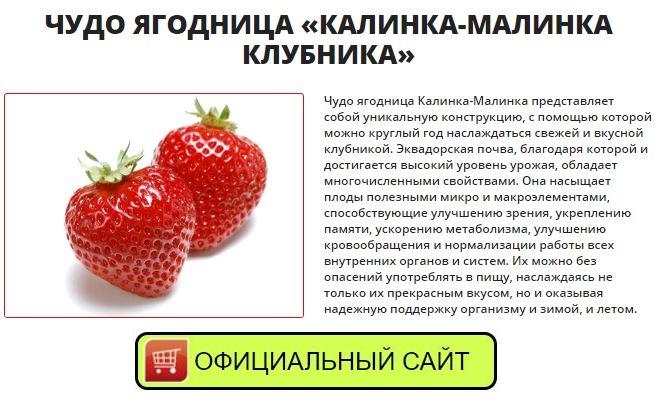 Как заказать где в Майкопе купить ягодницу калинка-малинка
