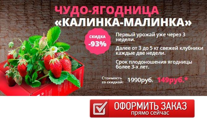 Как заказать домашняя ягодница клубника отзывы