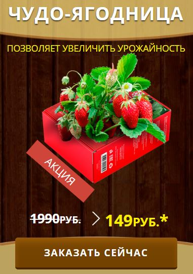 Как заказать Ягодница клюбники купить в Оренбурге